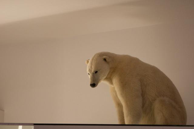 Natural History Museum Polar Bear