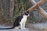 Gato at Anfiteatro romano