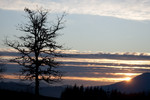 CorvallisWalking005