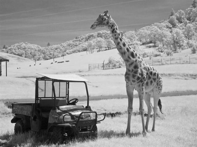 wl safari-03