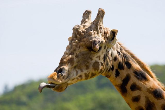 wl safari-09